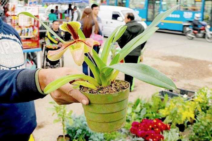 Что делать с орхидеей после покупки?
