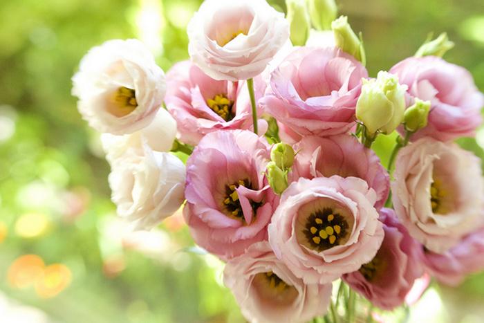 Эустома (лизиантус): выращивание из семян в домашних условиях