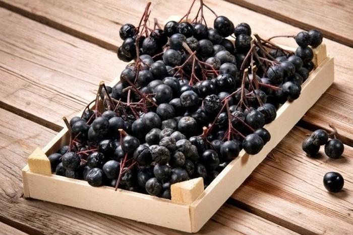 Черноплодная рябина: полезные свойства, применение