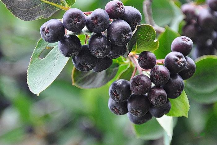 Сок из черноплодной рябины (аронии)