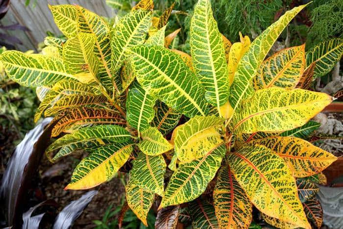 Название и фото декоративно-лиственных цветов