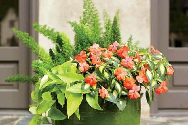 Композиции из комнатных растений и цветов своими руками