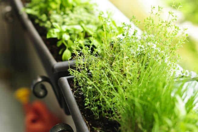 Тенелюбивые комнатные растения: описания, фото и названия