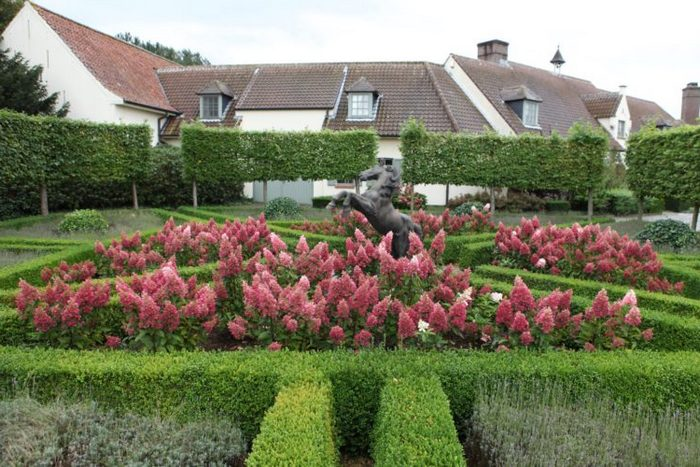 Гортензия Пинки Винки в саду