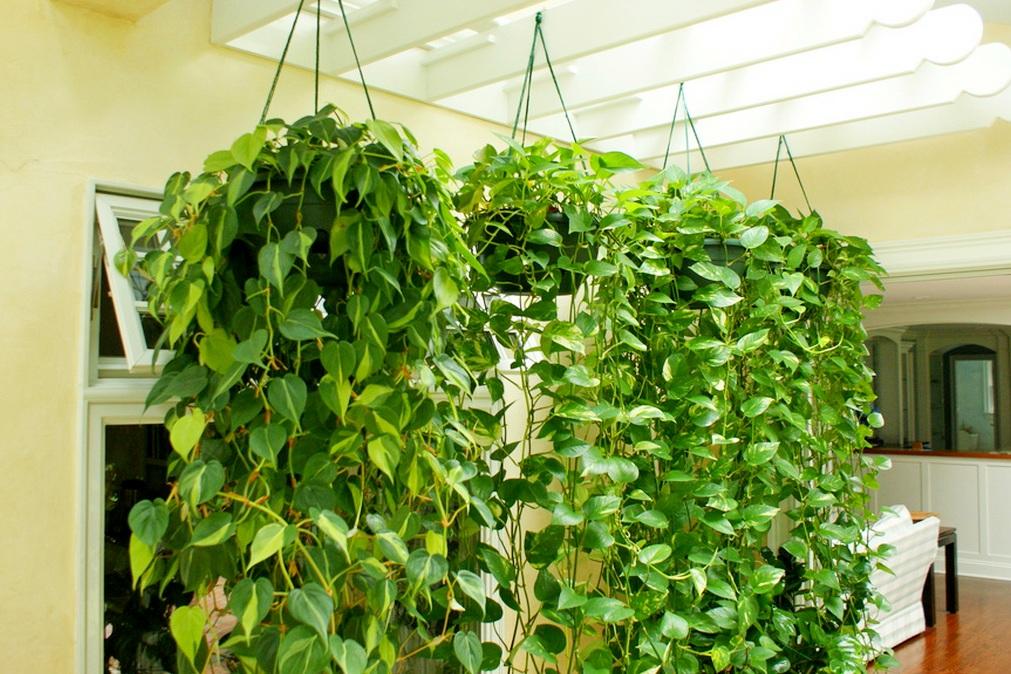 Комнатные растения, очищающие воздух от токсинов и химических веществ