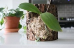 Орхидея на куске коры